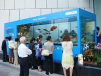 20080724okinawa_ginza_sony.jpg 沖縄美ら海水族館が銀座ソニービルにやってきた