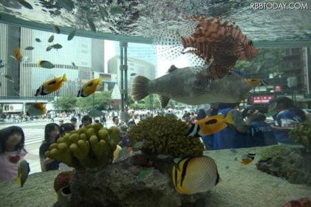 2011sony_bill_水族館.jpg ソニービルの沖縄水族館と3D映像