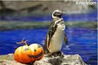 すみだ水族館 ハロウィン ペンギン