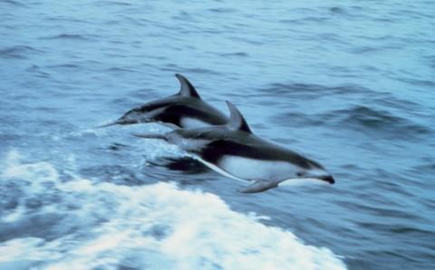 イルカの画像 p1_30