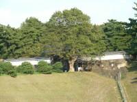 mon029.JPG 皇居半蔵門